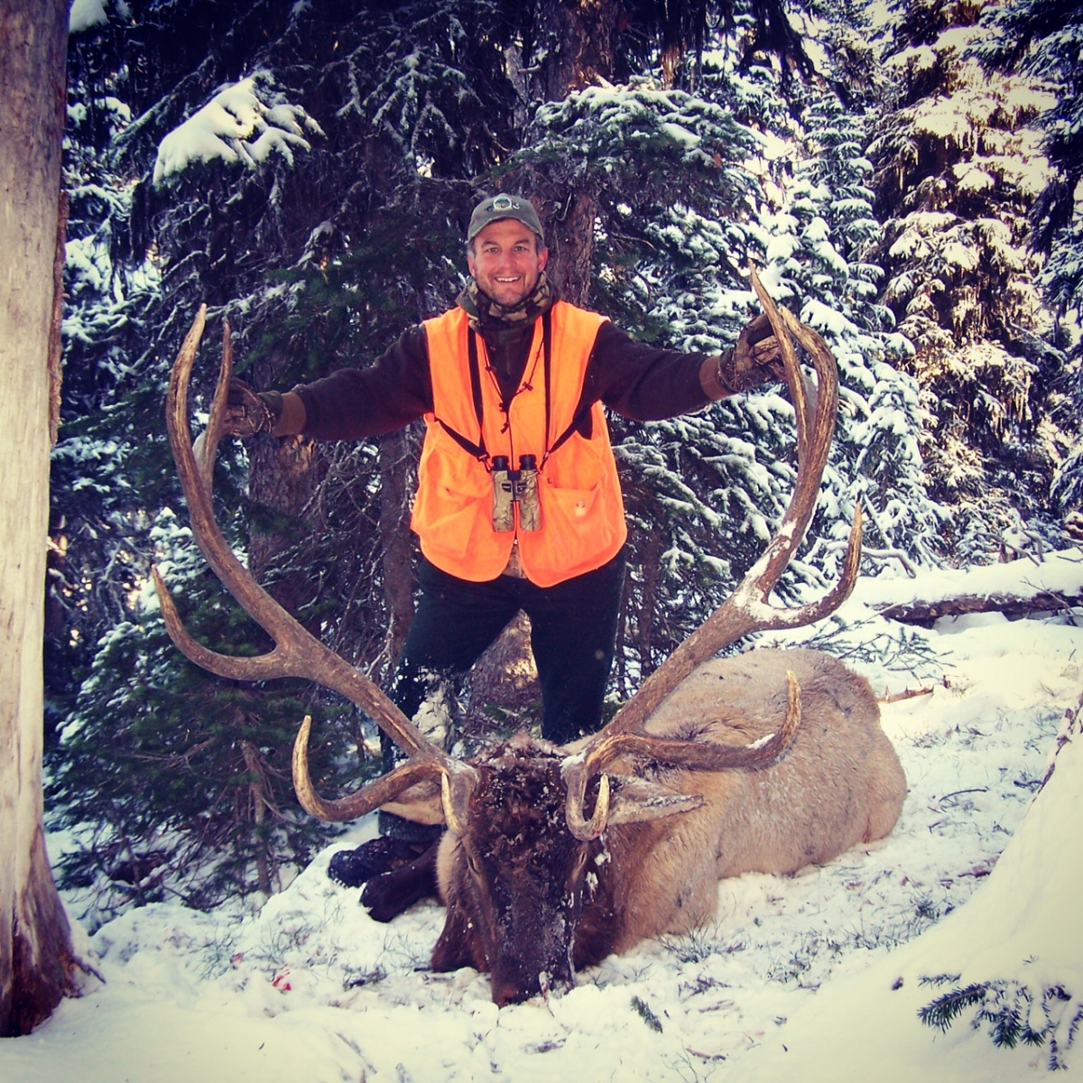 Hunting Photo: Montana Bull Elk