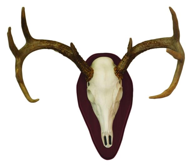 Euro Half Skull Deer Mount Kit