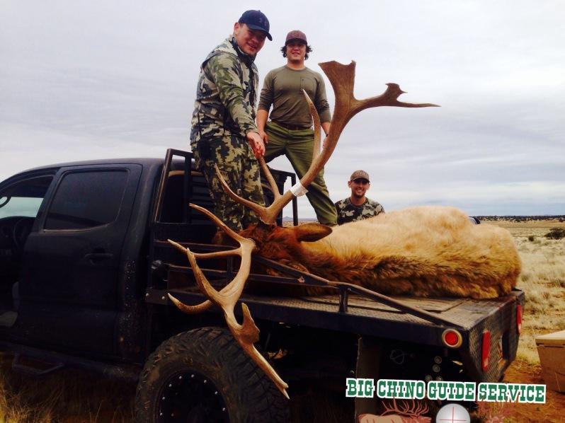 Big Chino Elk