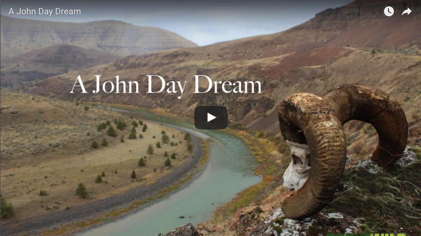 Video: A John Day River Bighorn Sheep Adventure