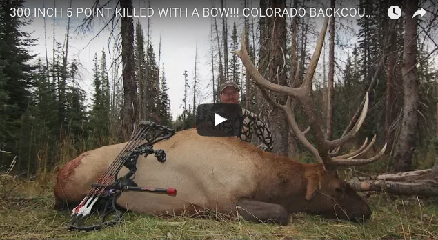 Video: Bowhunting Monster Bull Elk in Colorado